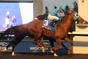 Woodbine November 15 2013 R8 Autumn Stakes Alpha Bettor Jockey Justin Stein WEG/michael burns photo