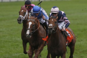 Mondialiste - G1 Ricoh Woodbine Mile Michael Burns photo