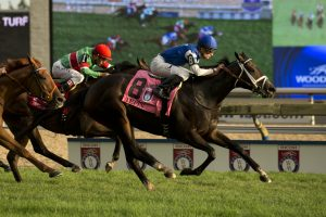 Tepin - Woodbine Mile - Micheal Burns Photo
